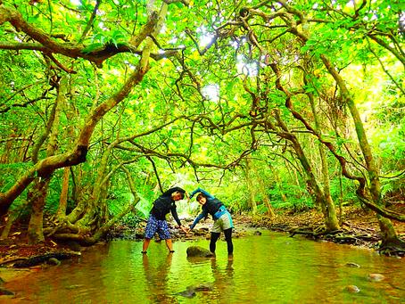 西表島で島旅を楽しもう〜💚緑溢れるジャングルへ〜