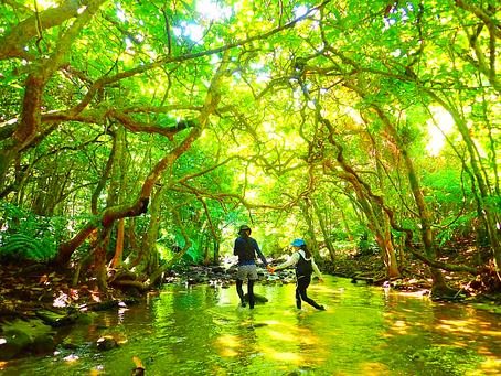 西表島の大自然で遊ぼう〜🌴