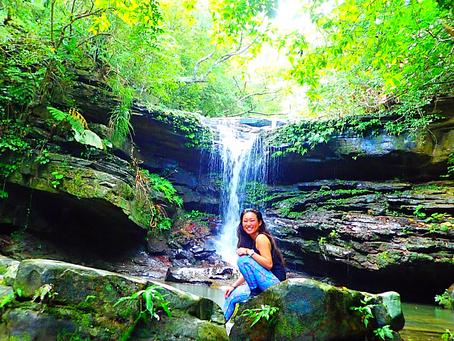 水と緑の島〜西表島で秘境の滝へ行こう〜🌴💙