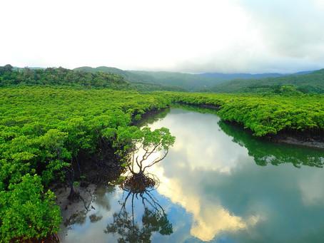 西表島で癒しの島旅を〜💙🌴マングローブクルーズ