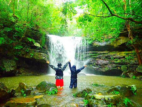 古の森〜ジャングルの滝へ行こう〜🌴💙