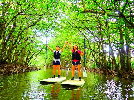 西表島女子旅でマングローブSUP〜💚🦋