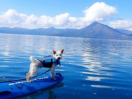 秋晴れ〜支笏湖でDog SUP~🐾🍁💙