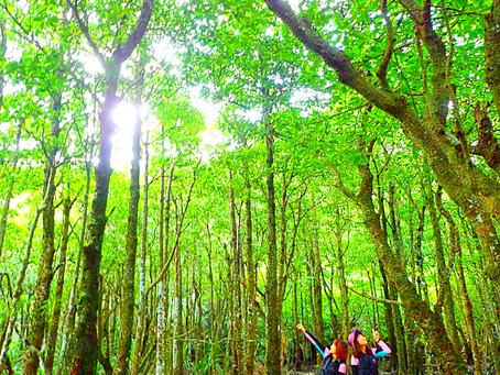 西表島でマングローブの森へ行こう〜💚🌴