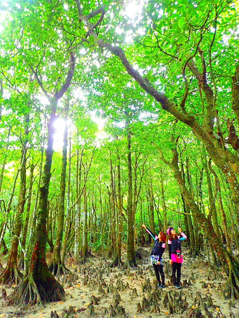 石垣島旅行・西表島で人気No1のSUPツアーで最高の島旅を!ケンガイドおすすめSUP秘境パワースポット巡りやシュノーケル・キャニオニングなど遊びは自由自在!女子旅行・学生旅行・家族旅行で観光アクティビティSUP体験を、西表島でSUP遊びを満喫しよう。