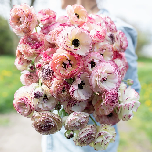 Mother's Day | Ranunculus Bunch