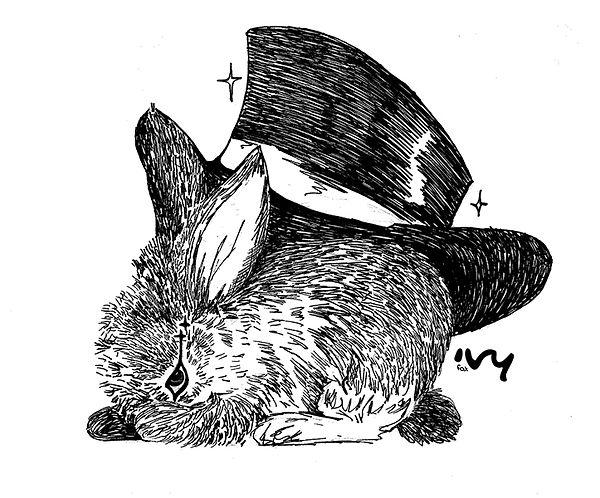 conejo.jpg