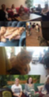 KittyCalm2.jpg