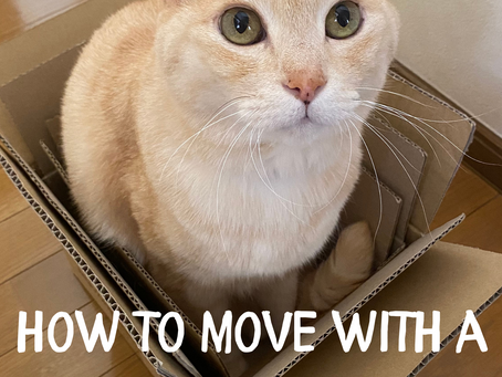 HOW TO MOVE WITH A CAT