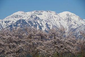 春の八海山.jpg