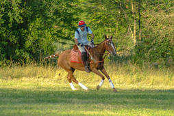 Polo lesson for beginers organized by Haras de Charme boutique Hotel