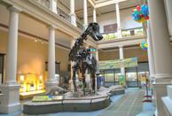 Museo Ciencias Naturales de la ciudad de La Plata