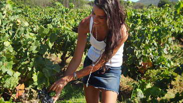 Vineyard in Saint Tropez, France