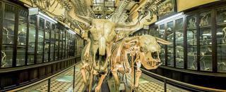 Museo ciencias naturales de La Plata