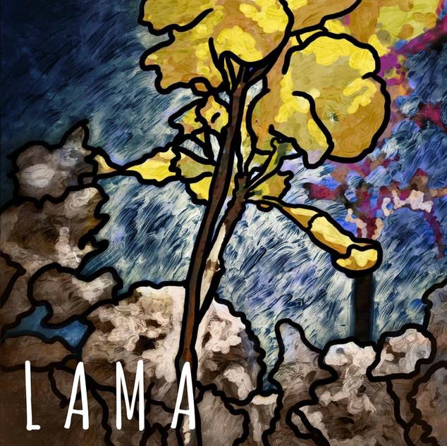 Lama, by Barbara Schucko