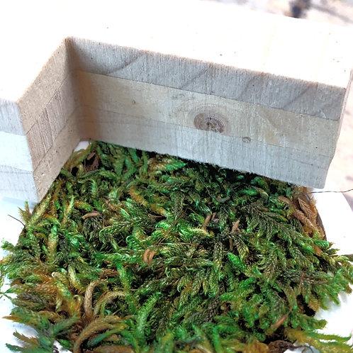 Lettre et logo végétal naturel : mousse sur bois naturel