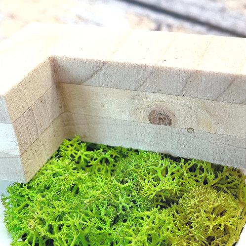 Lettre et logo végétal naturel : lichen sur bois naturel