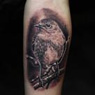 robin-bird-tattoo-jammestattoo-inked-.jp
