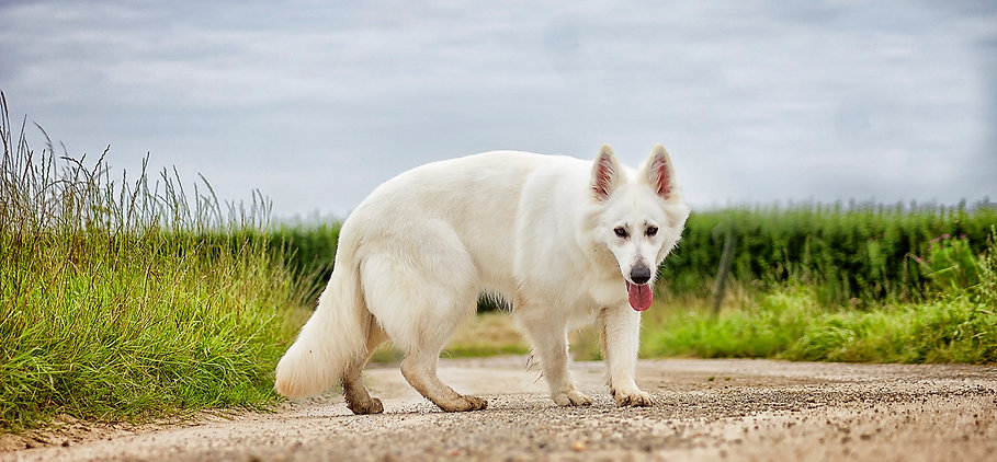 Worrywort a Twilght Zone at Dreamworks Berger Blanc Suisse