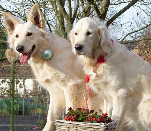 Wolfje (Rambo & Paisley)