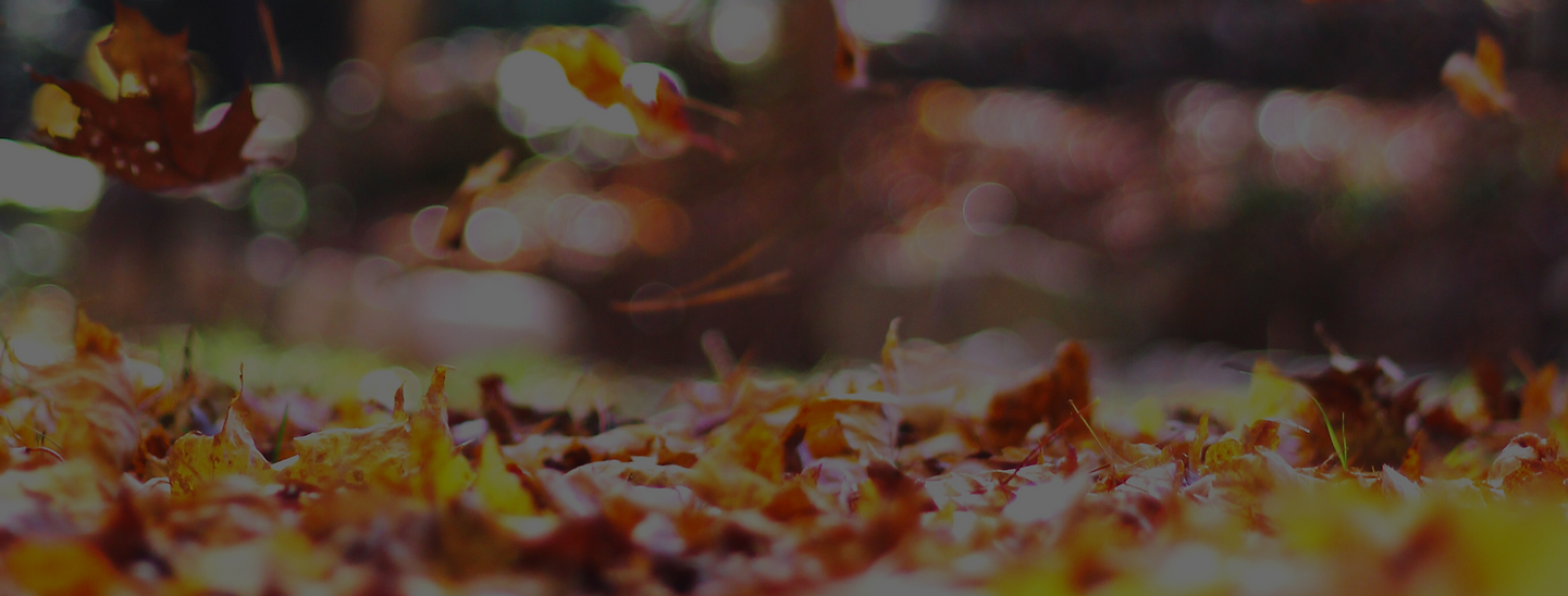 fall background for website.png