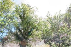 Les Baux-de-Provence #2