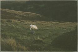 Dartmoor #1