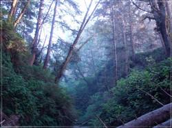 Fern Canyon #1