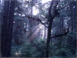 Redwood National Park #3