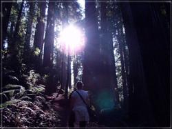 Redwood National Park #2