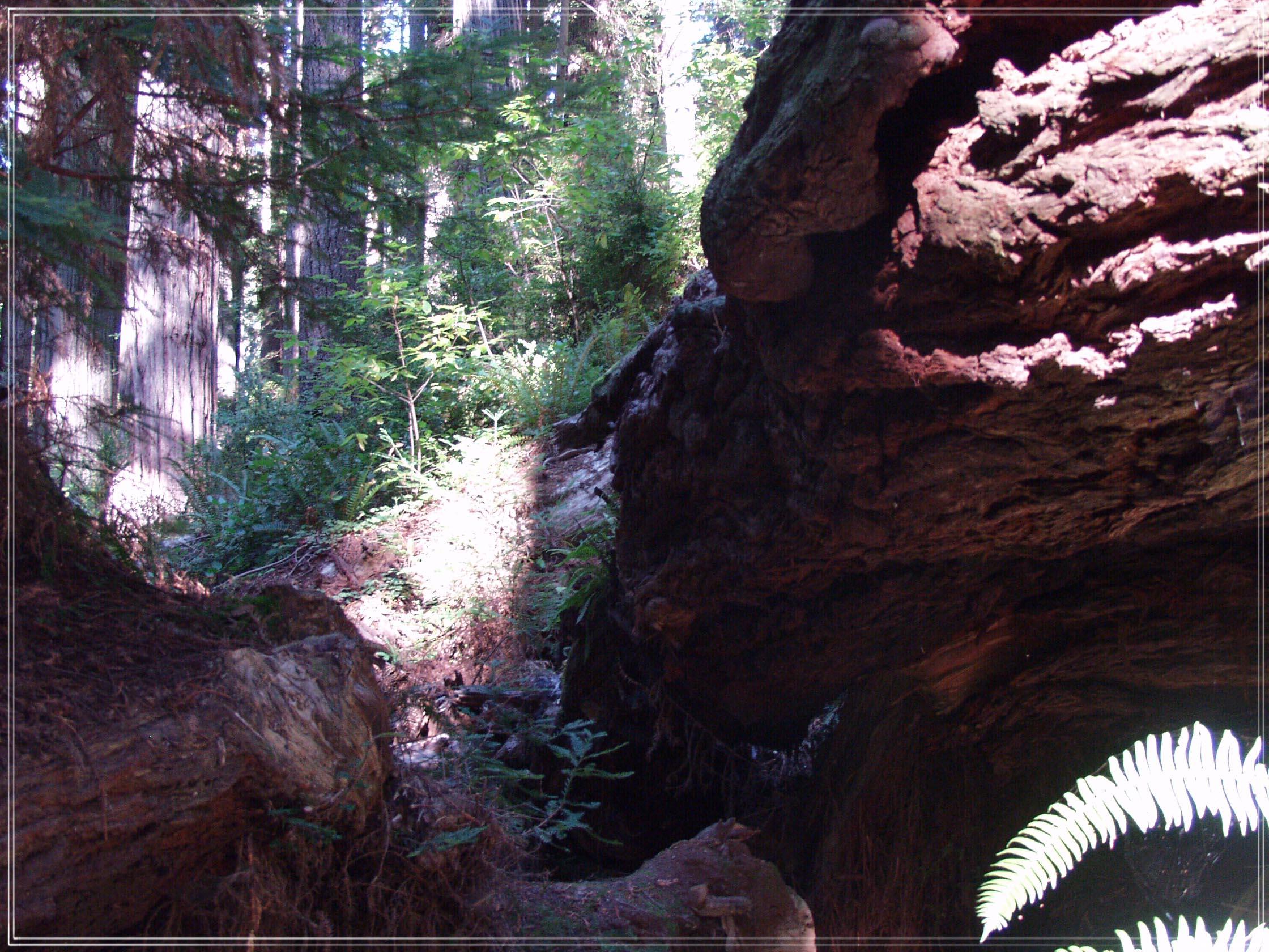 Redwood National Park #1