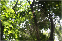 Web and web-builder