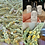 Thumbnail: Mullein Ear Oil~Wildcrafted