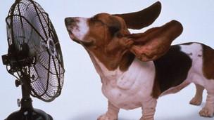 Les Animaux et la chaleur