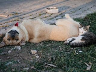 CANICULE  : PROTÉGEZ VOS ANIMAUX