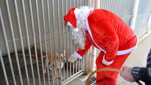 Un beau Noël des protégés