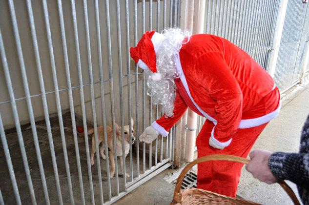 le Père Noel et nos protégés