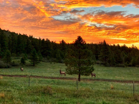 What beauty we see in Las Vegas, NM and Surrounding Areas! Click on this photo for more inspiration!