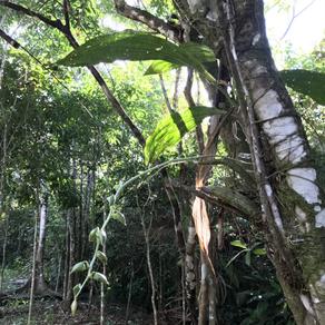 Schönheiten der Tropen