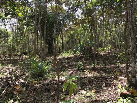 Rundgang durch den Kakaowald