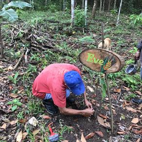 Kakao-Veredelung: Erfolg in kleinen Schritten