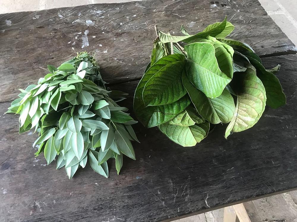 Madero Negro und Guaba als natürlicher Dünger und Insektizid