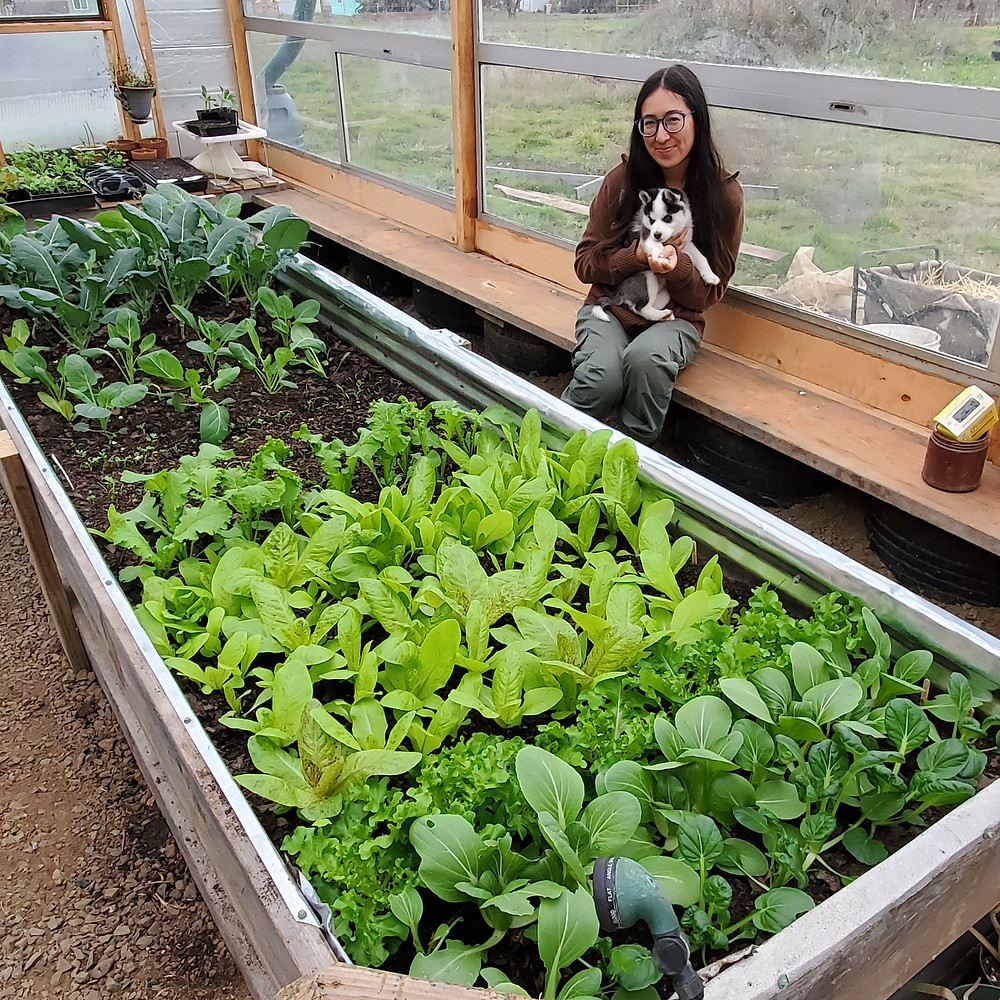 Eliza Mason and her new plants growing in the raised bed of her greenhouse at Lilliputopia.