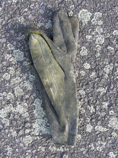 gants08.jpg