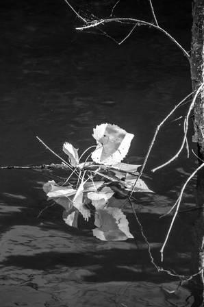Lake Fall Reflection