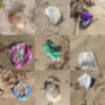Turtle Island Restoration Network 2020 Update