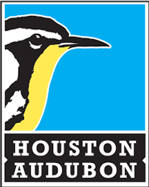 Houston Audubon Updates