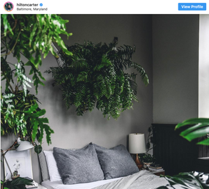 Gray bedroom filled with plants and large plant over the bed from Hilton Carter's Instagram