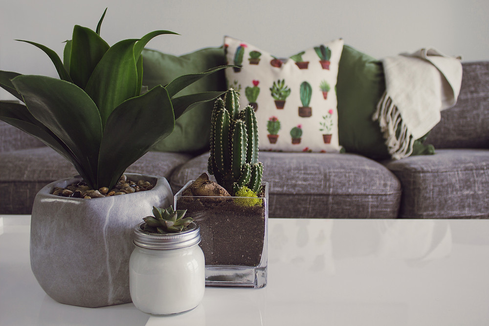 plants and succulents on coffee table in cute living room