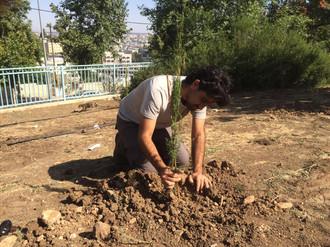 יום נטיעות, ירושלים 5.7.2020